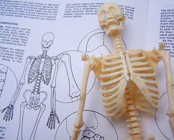 スウェディッシュスクール解剖生理学講座